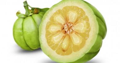 Gardenia Gambogia Fruit